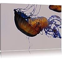 meduse graziosa in acqua nero / bianco