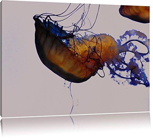 anmutige Qualle im Wasser schwarz/weiß auf Leinwand, XXL riesige Bilder fertig gerahmt mit Keilrahmen, Kunstdruck auf Wandbild mit Rahmen, günstiger als Gemälde oder Ölbild, kein Poster oder Plakat (California Weiß-plakat Und Schwarz)