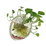 XelparucTS 1Gallon Acrilico Trasparente Appeso a Parete Fish Bowl Aquaponic Tank acquari pianta Fish Bubble