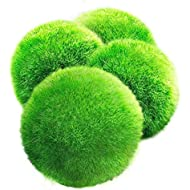 LUFFY Moss Balls - Aesthetically Beautiful & Create Healthy Environment - Eco-Friendly, Low Maintenance & Curbs Algae Growth - Shrimps & Snails Love Them