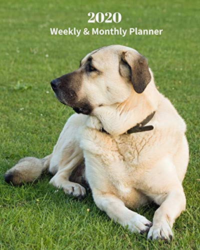 2020 Weekly and Monthly Planner: Monthly Calendar with U.S./UK/ Canadian/Christian/Jewish/Muslim Holidays- Calendar in Review/Notes 8 x 10 in.-Anatolian Shepherd Dog Breed Pets