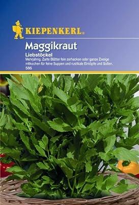 Maggikraut Liebstöckel mehrjährig von Kiepenkerl bei Du und dein Garten