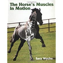 Horse's Muscles in Motion