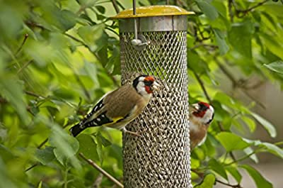 Peckish Large Metal All Weather Nyger Seed Bird Feeder by Peckish