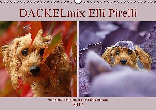 dackelmix-elli-pirelli-wandkalender-2017-din-a3-quer-mit-neuen-abenteuern-aus-der-hundeknipserei-mon