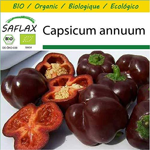 SAFLAX - Anzucht Set - BIO - Paprika - Sweet Chocolate - 10 Samen - Mit Mini-Gewächshaus, Anzuchtsubstrat und 2 Töpfen - Capsicum annuum