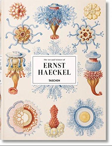 XL-Haeckel