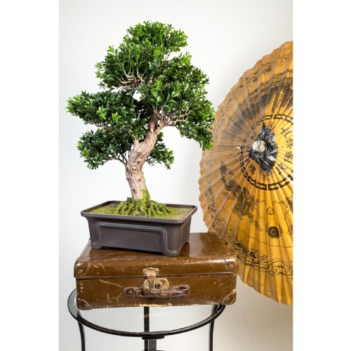artplants Künstlicher Buchs Bonsai in Schale, 550 Blätter, 65 cm – hochwertiger Kunstbonsai Buchsbonsai