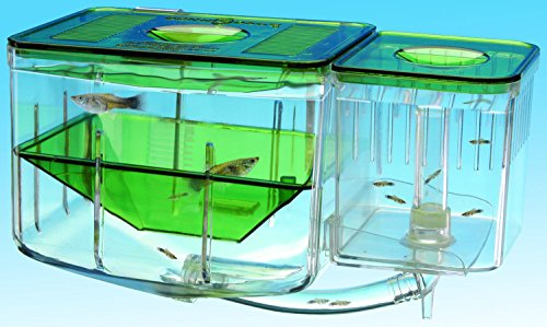 aquarium-automatic-circulating-breeding-hatchery