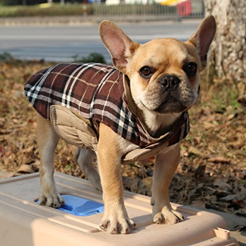 Cane Impermeabile Inverno Cappotto Giacca A Quadri Reversibile Vestiti Caldi Xxl Beige