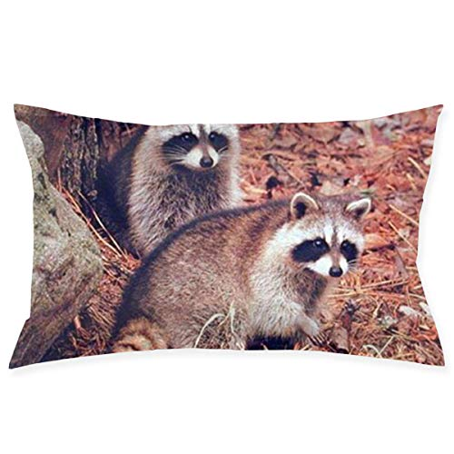 Throw Pillow Cases Pair of Racoon Wildlife Baby Animal Pillow Case Sofa Car Waist Throw Cushion Cover Home Decor Decorative Polyester and Linen Throw Pillow Case Cushion Cover 18x30 Inch