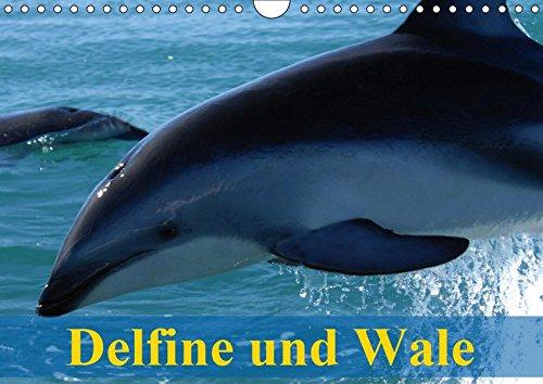 Delfine und Wale (Wandkalender 2019 DIN A4 quer): Kluge Köpfe und Giganten der Meere (Monatskalender, 14 Seiten) (CALVENDO Tiere)