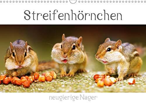 Streifenhörnchen - neugierige Nager (Wandkalender 2020 DIN A3 quer)