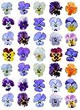 JK, 35 decorazioni per torte in carta di riso commestibile, motivo: fiori di pensiero
