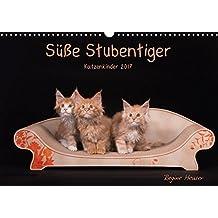 Süße Stubentiger - Katzenkinder (Wandkalender 2017 DIN A3 quer): Katzenkinder 2017 (Monatskalender, 14 Seiten ) (CALVENDO Tiere)