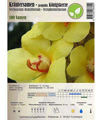 Kräutersamen - Königskerze - Großblütige/Verbascum densiflorum 100 Samen