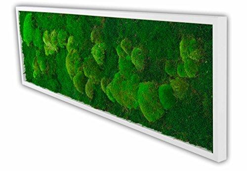 Moosbild Pflanzenbild mit Kugelmoos und Flachmoos versch. Maße günstig (Weiß, 140x40 cm)
