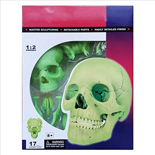 SHUAI Fluoreszenz Schädelknochen Medizinisches Modell Plastische Chirurgie Dekoration (Gruselig So Halloween-buch Nicht)