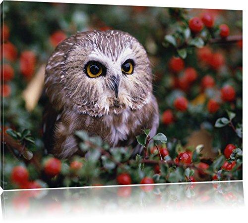 2 Gerahmte Vogel-prints (Kleine Eule im Vogelbeerenstrauch Bild auf Leinwand, XXL riesige Bilder fertig gerahmt mit Keilrahmen, Kunstdruck auf Wandbild mit Rahmen, guenstiger als Gemaelde oder Bild, kein Poster oder Plakat, Format:60x40 cm)