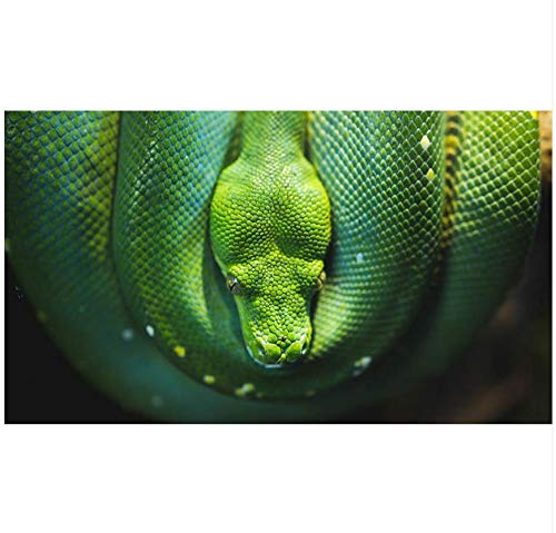Ayzr Custom 3D Photo Wall Mural Python Tapetes For Living Room 3D Photo Tapete Green Tropical Bar Wall Background,400Cmx250Cm - Python-stoff