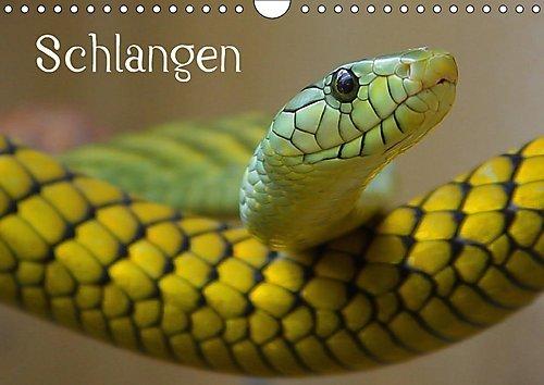 schlangen-wandkalender-2017-din-a4-quer-giftige-und-ungiftige-schlangen-in-beeindruckenden-farben-mo