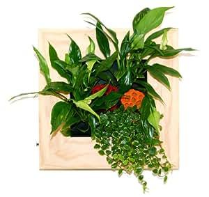 TABLEAU VEGETAL PETIT NOUMEA BOIS AVEC VERITABLES PLANTES