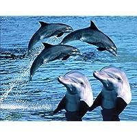 Magnete per frigorifero, motivo: delfini