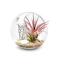 Idea Regalo - Mkouo Tabletop Air vaso terrario decorativo in vetro globo artificiale piante grasse vaso portacandela S, Brown/Clear, S