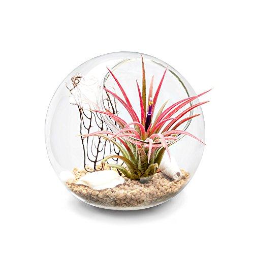 Mkouo Terrario de sobremesa de cristal, tipo globo, ideal para velas o plantas aéreas y suculentas, tamaño S, Brown/Clear, S