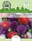 Thompson & Morgan Urban Garden Blumen Aster Ostrich Plume Mischung 350 Samen
