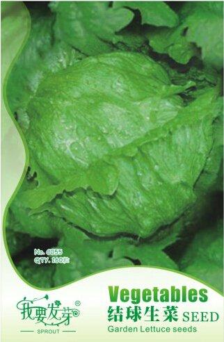 10 paquets originaux, 160 graines/Pack, Laitue Iceberg laitue cultivée graine de légume