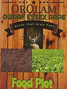 OrOlam 3 Lbs King Shot Forage Food Plot Bulk Dwarf Essex Rape Seeds Whitetail Deer Goose Honey Bee Seeds That Grow Fast