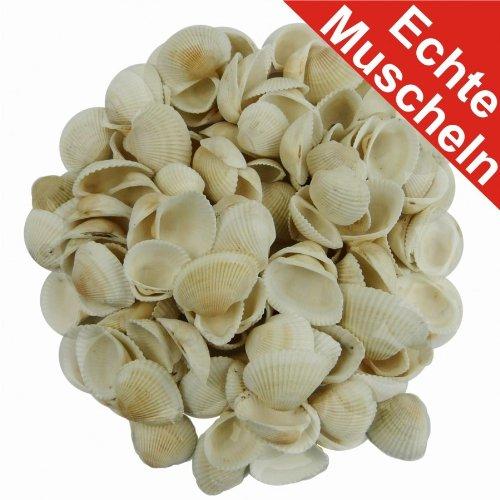 Deko Muscheln 340g echt sortiert weiss-creme Muschelschalen Dekomuscheln