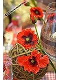 SIA Home Fashion DPI Papavero Papavero con 2 Fiori Aperti e Un bocciolo Rosso, Lunghezza Totale ca. 48 cm, Fiori Artificiali di Alta qualità