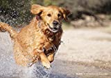 Aufnahme springender Hund