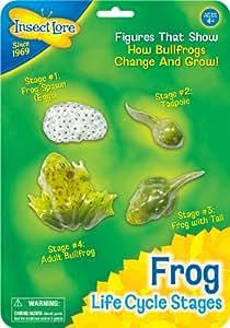 Insect Lore - 48126 - Le cycle de la vie grenouille