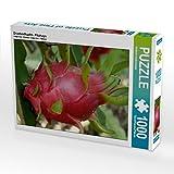 Drachenfrucht - Pitahaya 1000 Teile Puzzle quer (CALVENDO Natur)