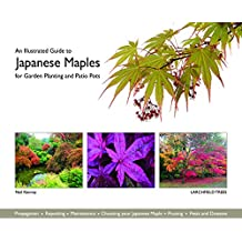 An Illustrated Guide to Japanese Maples for Garden Planting and Patio Pots