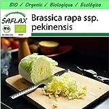 SAFLAX - - BIO - Cavolo cinese - Granat - 40 semi - Brassica rapa ssp. pekinensis