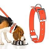 Sunix Wasserdichtes Set bestehend aus Hundehalsband mit passender Leine, PVC Halsband mit Leine, verstellbares Halsband für kleine, mittelgroße und große Hunde,Robustes Lauftraining Hundehalsband