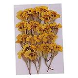 P Prettyia 24 Piezas Flores Secas Prensadas para Fabricación de Velas, Joyas, Colgantes y Dijes, Muestras, Arte de Uñas, Manualidades