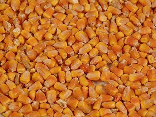 Bio Mais, im 10 kg Sack aus eigener Ernte -