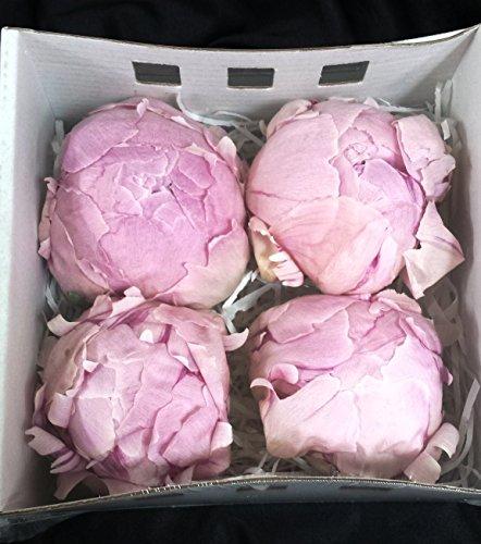 peonias-preservadas-grandes-rosas-4-unidades-portes-gratis