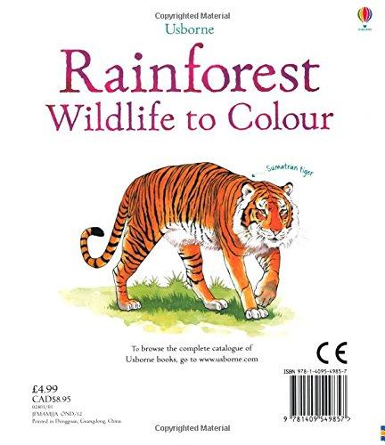 Rainforest Wildlife to Colour