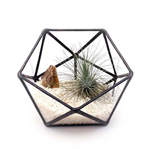 icosahedron-small-geometric-glass-terrarium-handmade-glass-planter-modern-planter-for-indoor-gardeni