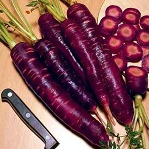 Semillas de zanahoria moradas Bonsai (500 unidades)