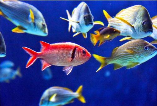 Startonight, luce nel buio Quadro su tela, pesce 80 cm x 120 cm