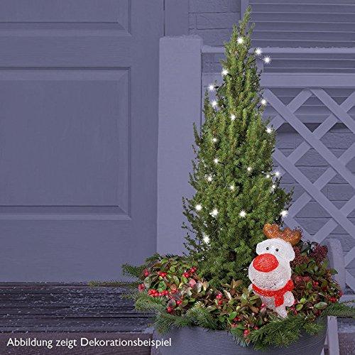 Zuckerhutfichte 60/80 cm im 23 cm Topf - immergrün, winterhart, dichter Wuchs - Picea glauca 'Conica' von Kölle