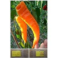 PlenTree '~ 30 semillas de calidad superior de la pimienta dulce '' Orange Horn' Extra Rare - Dulce largo