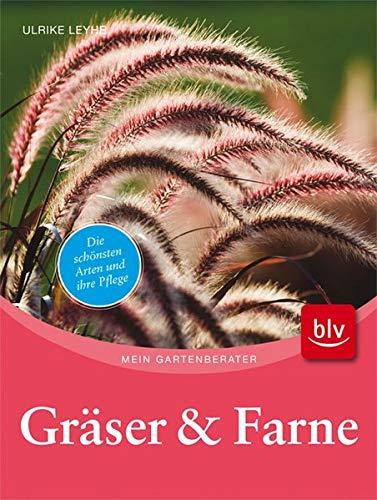 Gräser und Farne: Die schönsten Arten für sonnige & schattige Beete